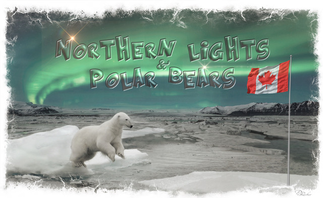Northern Lights & Polar Bears