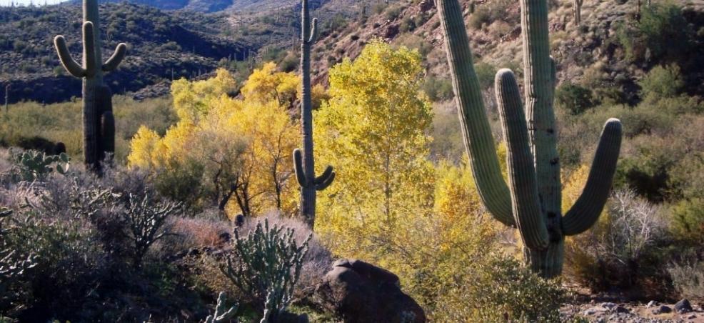 Cave Creek Regional AZ